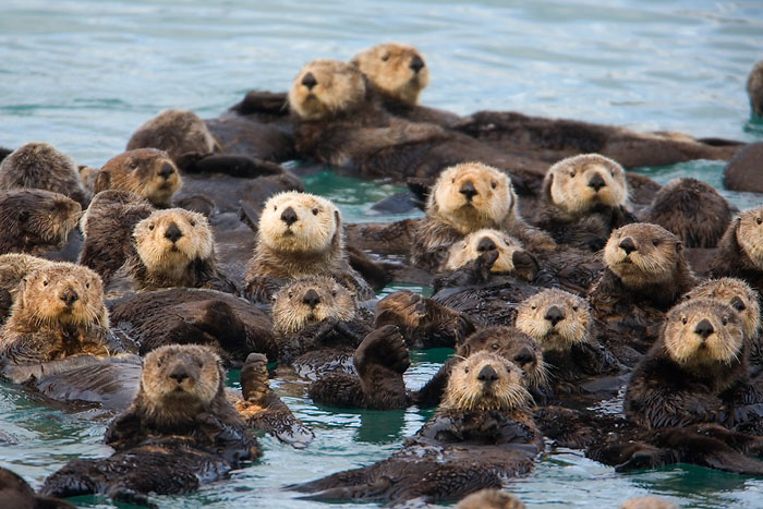 Otters in a Raft